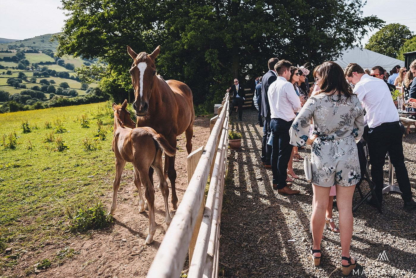 wedding guests and horses